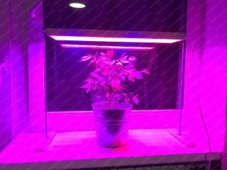 Фитосветильник Солнцедар Д-10 фито (красно-синий свет)